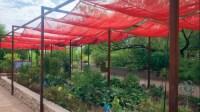 Vegetable Garden In Arizona - [audidatlevante.com]