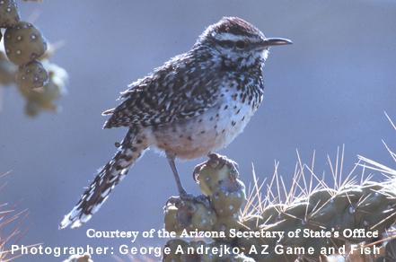 State Bird Arizona State Library