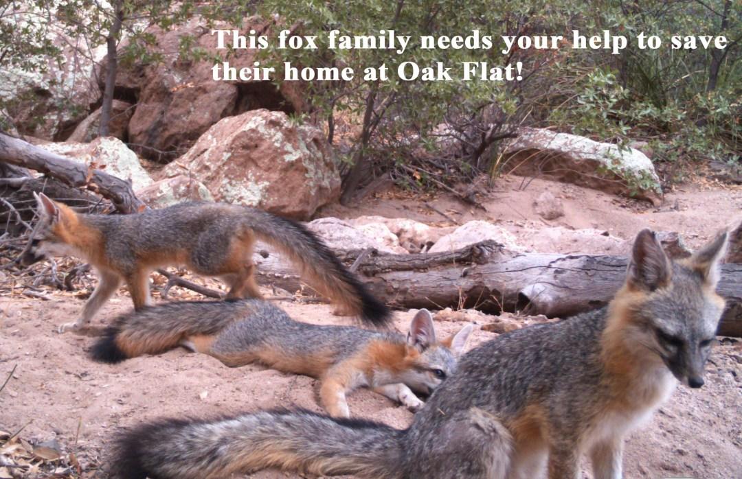 Fox family plea