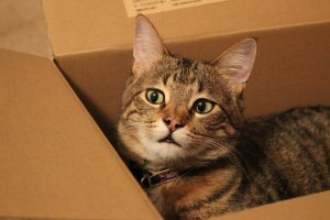 a cat in a box - moving from Texas to Arizona