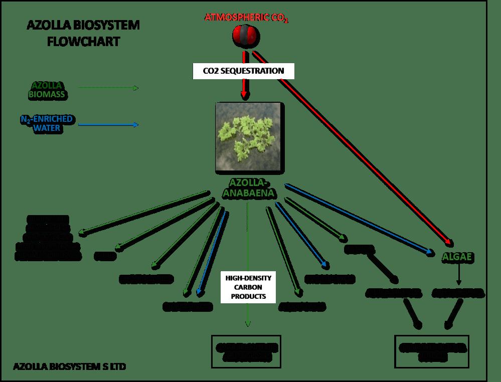 medium resolution of azolla flow chart