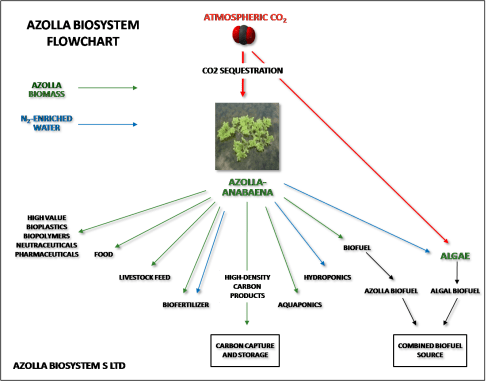 small resolution of azolla flow chart