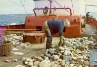Scalloping aboard Algrie PZ 199. Image ref: STE_1_091E