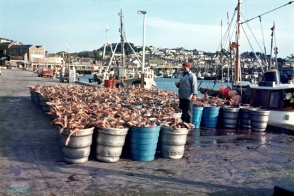Catch laid out at Newlyn. Image ref: STE_2_108E