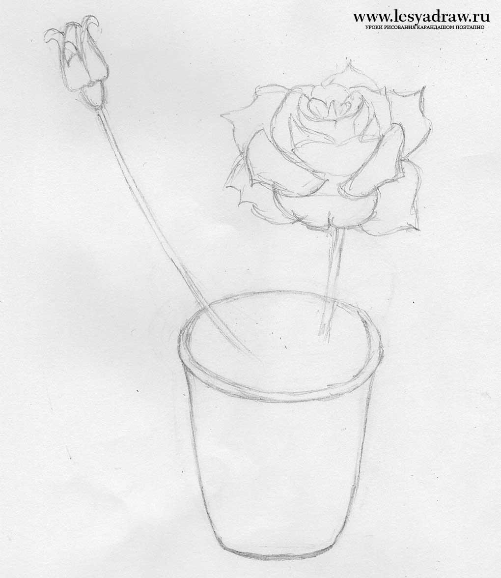 Cara menggambar bunga dalam pot. Cara menggambar bunga mawar ...