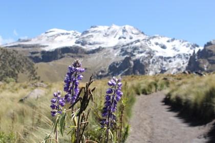 PEW Iztachihuatl con flores