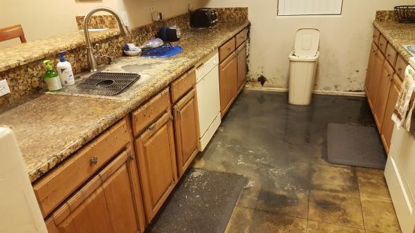 mold remediation chandler az condo