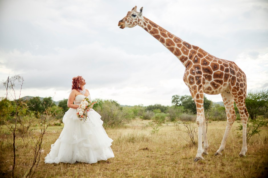 Shay's Giraffe Bridal Portraits in Uvalde