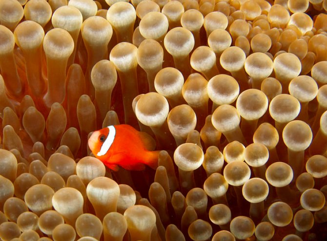 keeping anemones in the