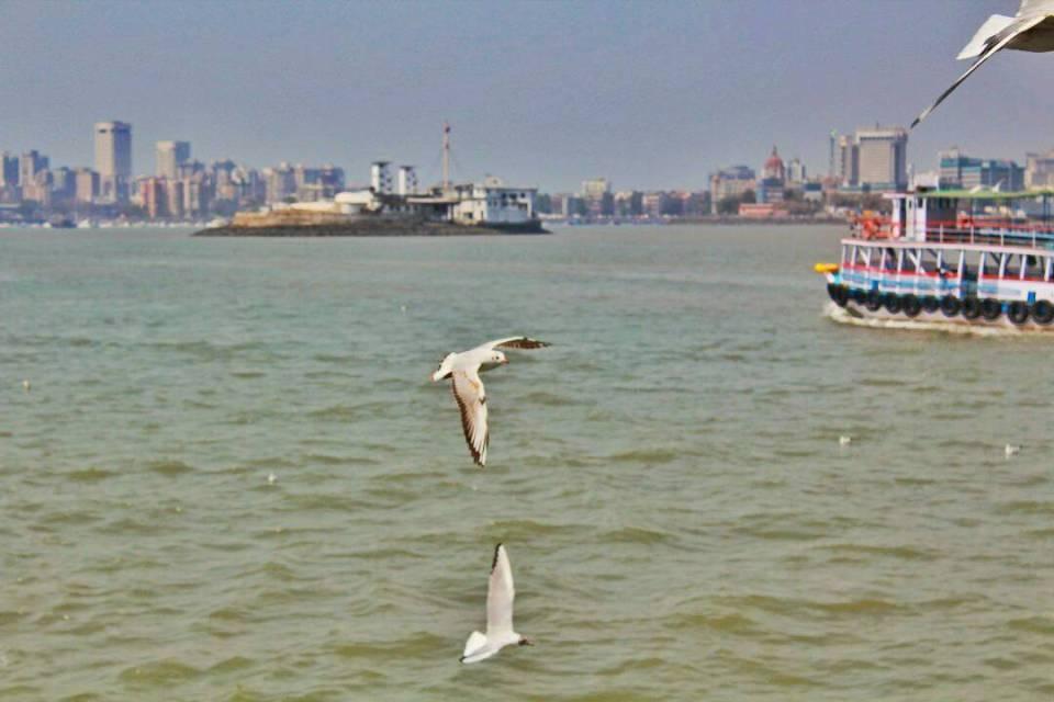 Elephanta Caves ferry - Voyager In The Arabian Sea 12 - The Azure Sky Follows - Elephanta Islands - Tania Mukherjee - seagulls