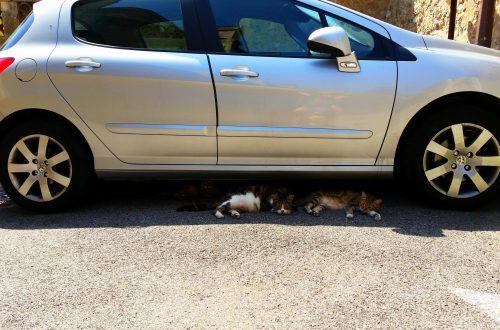 © Azurka. Котики из Ле-Канне. Каким транспортом добраться