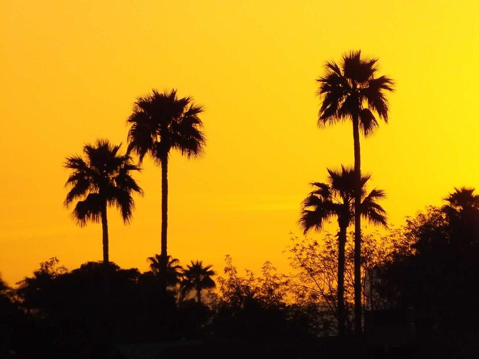 az-tequila-sunrise