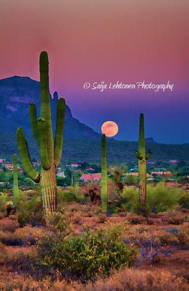Postcard Perfect Arizona by Saija Lehtonen