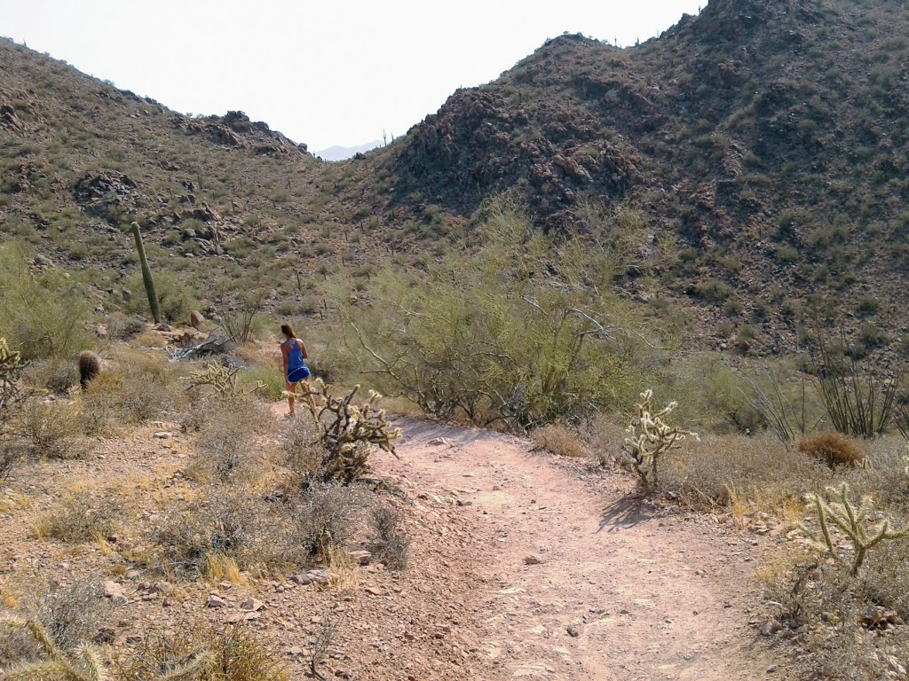 Hiking trail winding through desert cholla plants