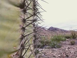 Saguaro-up-close.jpg