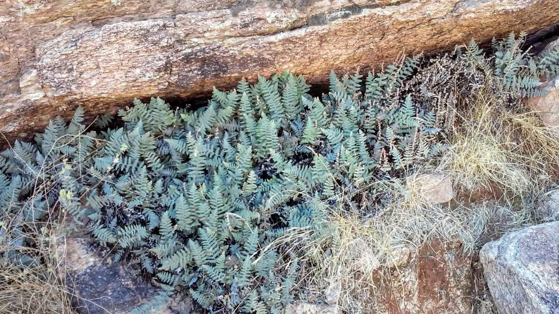 fern plants along a desert hiking trail