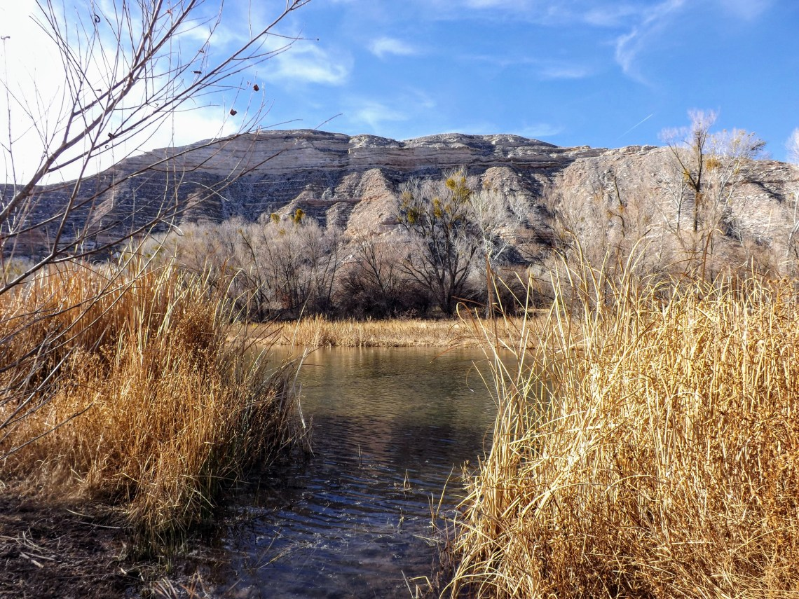 Verde River flows past an opening in high grass along the bank