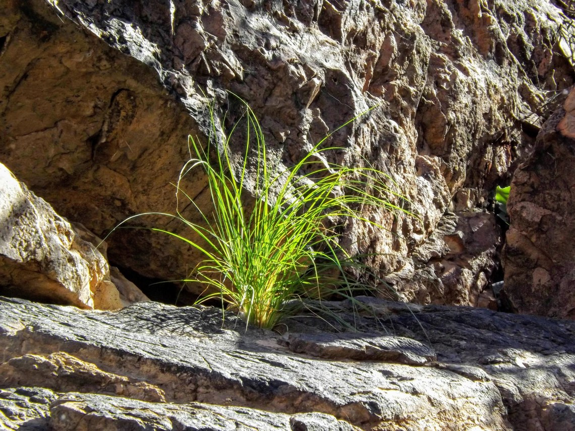 Grass growing out of rock