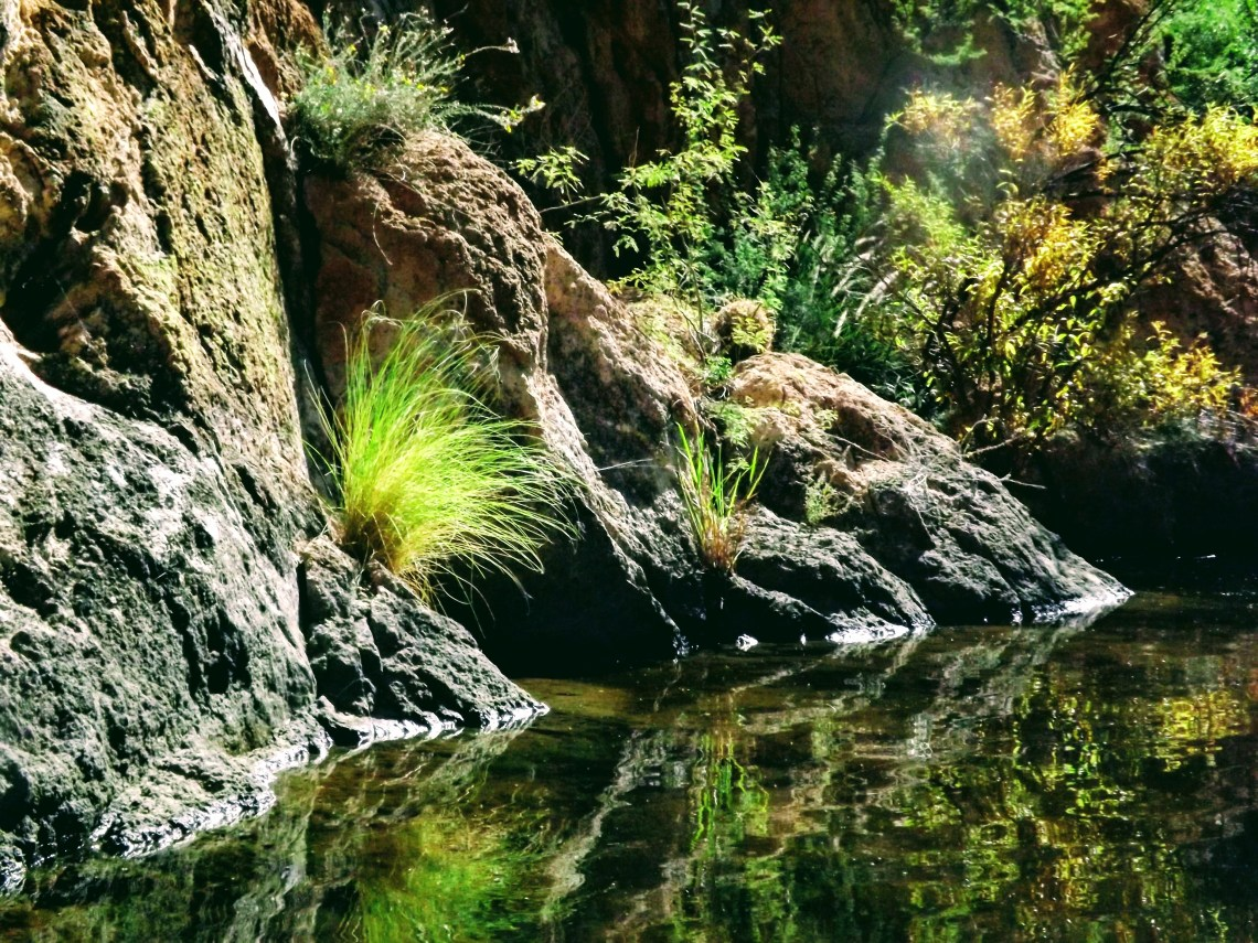 Grass plants in rock canyon wall illuminated by sunlight
