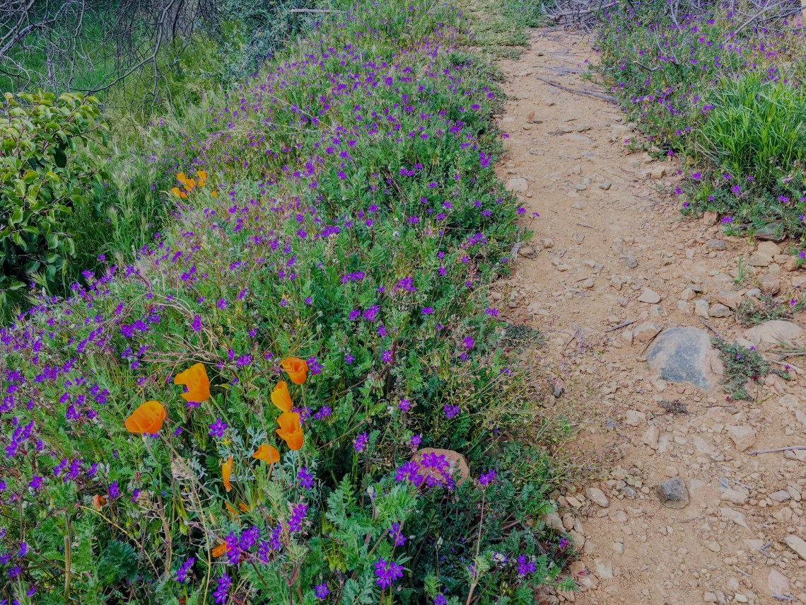 flowers line several sections of Cave Creek Trail #4.