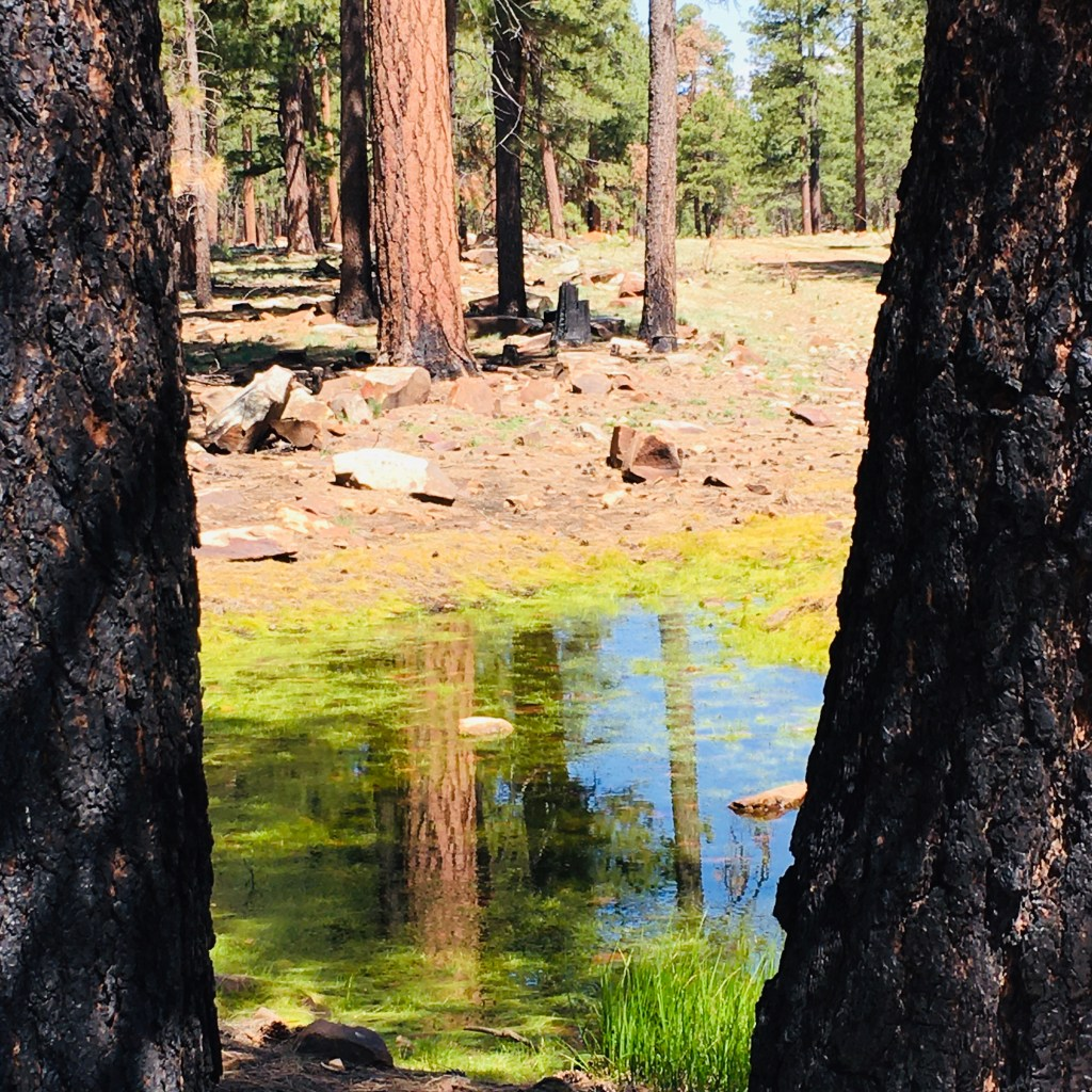 small pool of water in otherwise barren forest