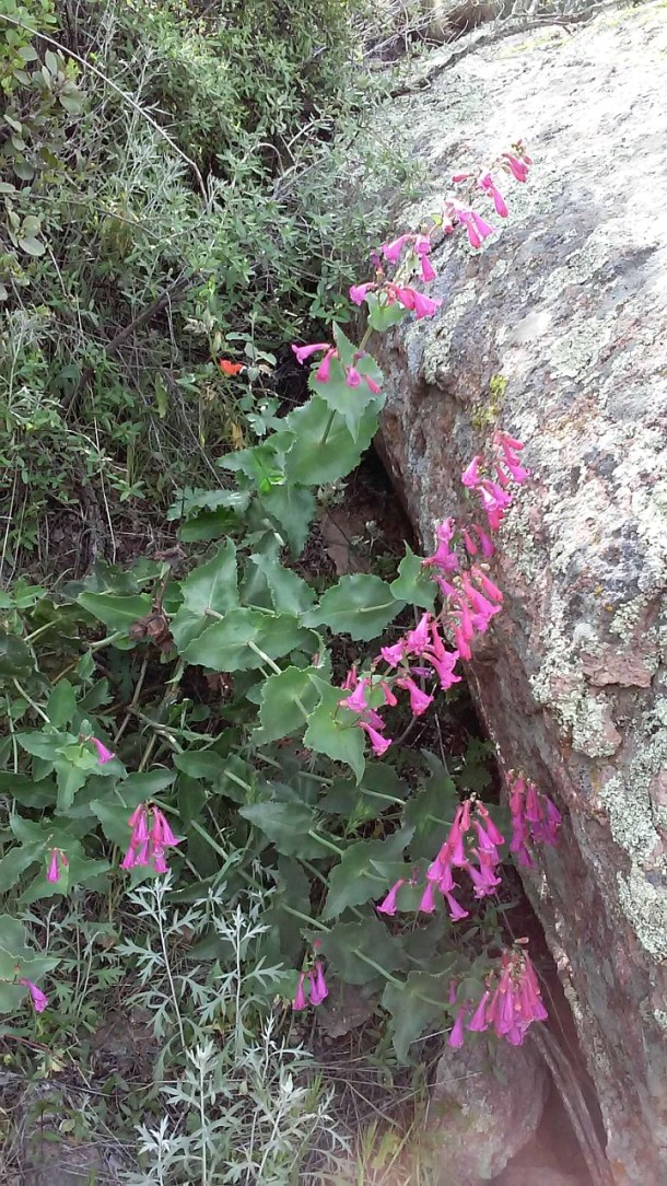 Superstition-flowers-9