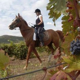 Equestrian tours - Tailor made holiday in Romania | Azzurytt itinerary planning