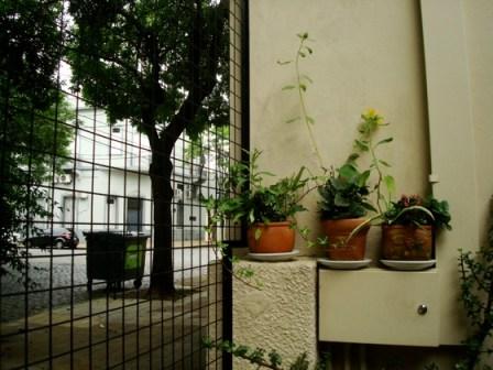 Macetas y verde en el patio