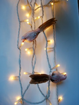 Birds with lights