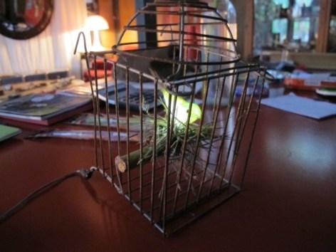 Experimentos con LEDs 1