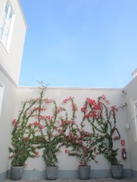 Flores trepadoras en el patio de MATE. Foto