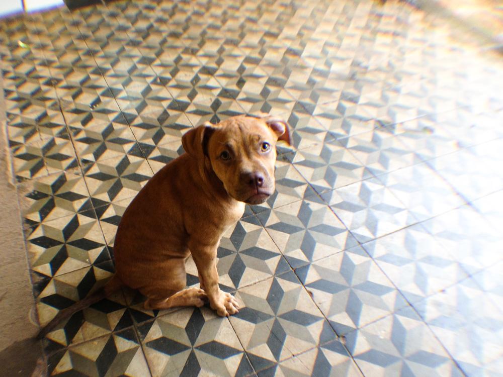 Piso del hostel Vuela el pez de Posadas, Misiones. Foto