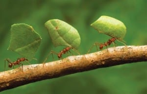 Ants at work! Photo courtesy: Google image.