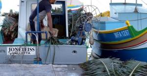Stocking up with palm fronds.