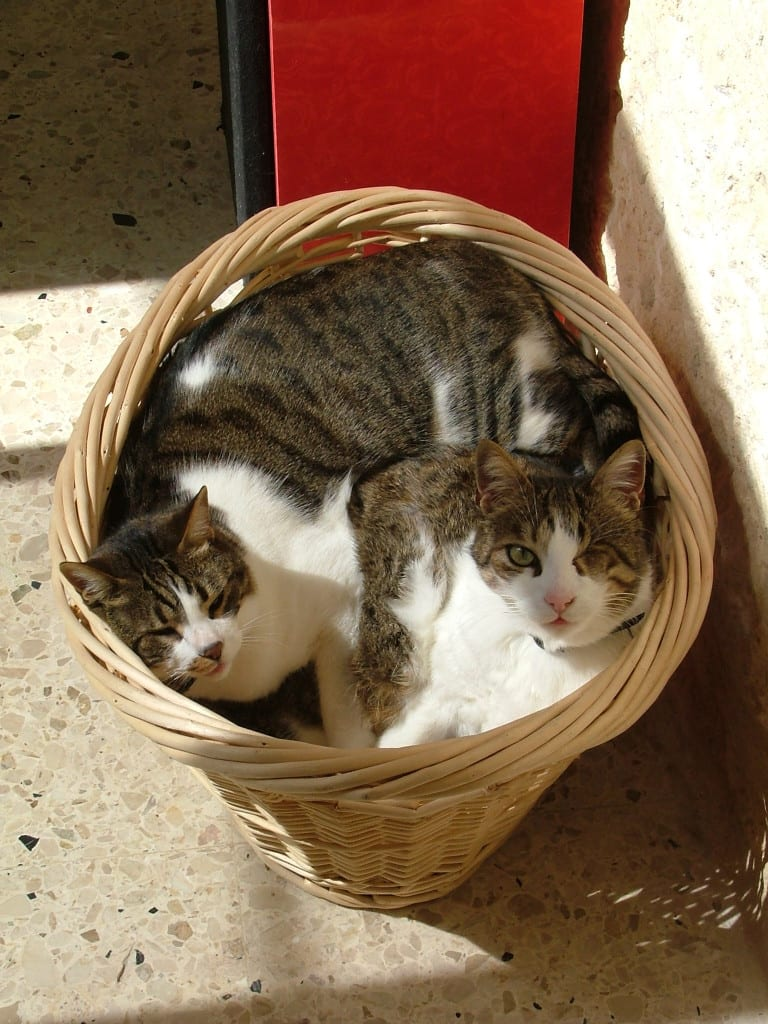 Basket love