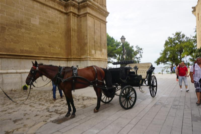 Horse outside Palma Cathedral, but no birds!