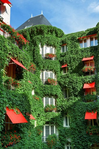 Walls of greenery in the Plaza courtyard