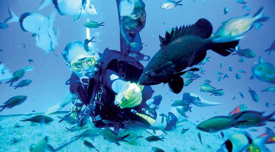 Scuba diving in clear blue water.