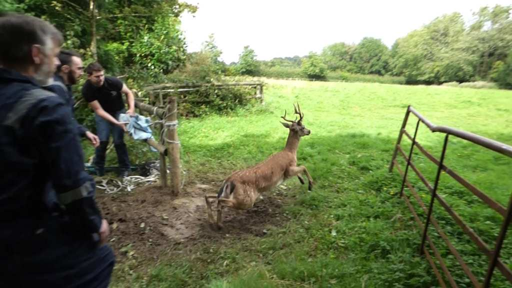 High Hurstwood Deer Rescue 20th Aug 2016 (7)