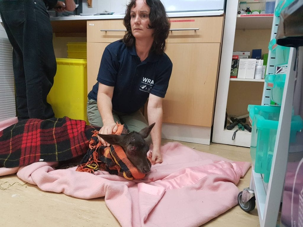 Kathy Martyn with the Road Casualty Deer from Nutley (1)