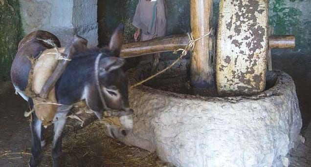 donkey-work-for-the-poor-donkey