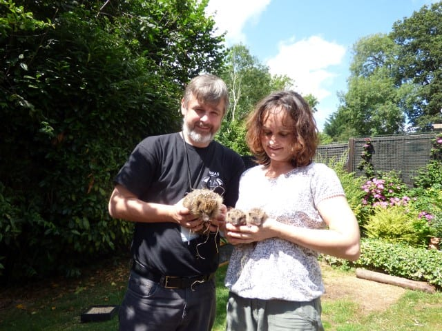 Trevor with his partner Kathy Martyn with mum and baby hedgehogs (Small)