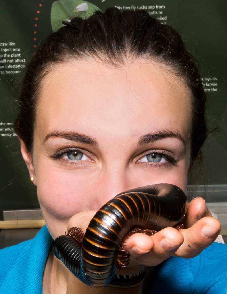 Up-close-to-a-giant-milipede