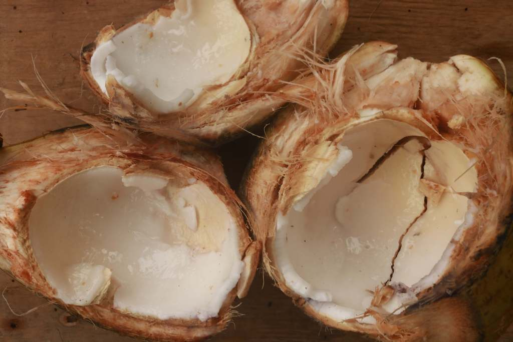 Fresh coconuts opened to order for only cd p each