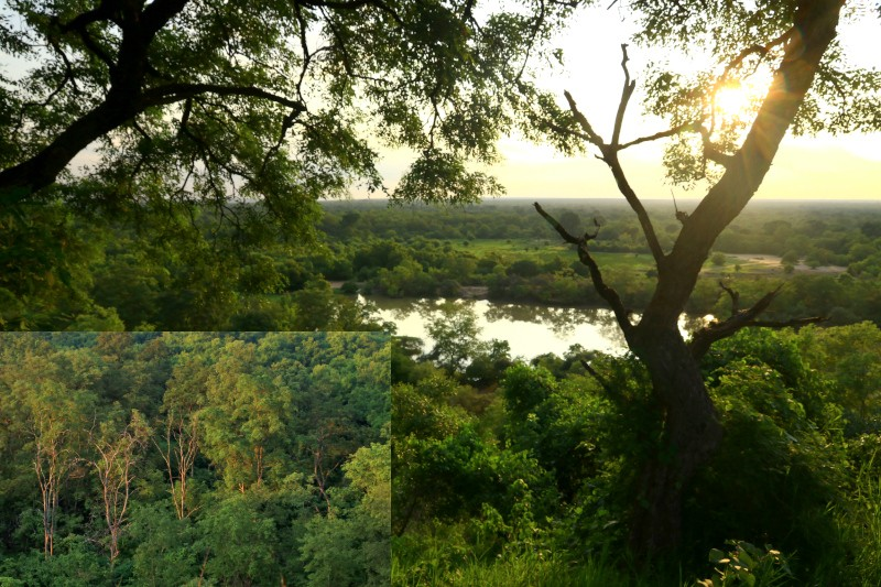 Looking out towards the large watering hole and sunlight over woodland Mole NP