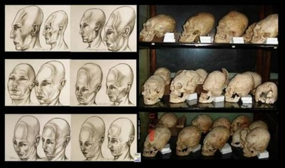MalDia Different types of Earth skulls