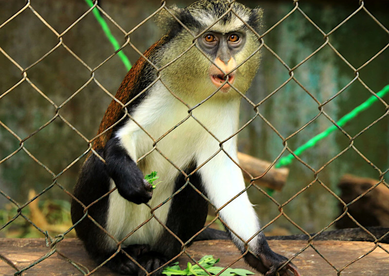Small monkey with food