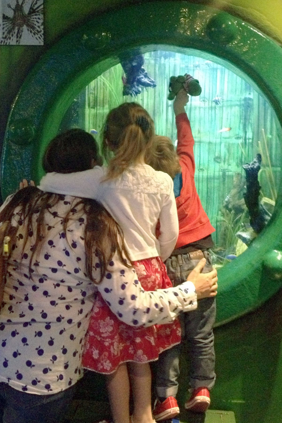 Southend-aquarium-16