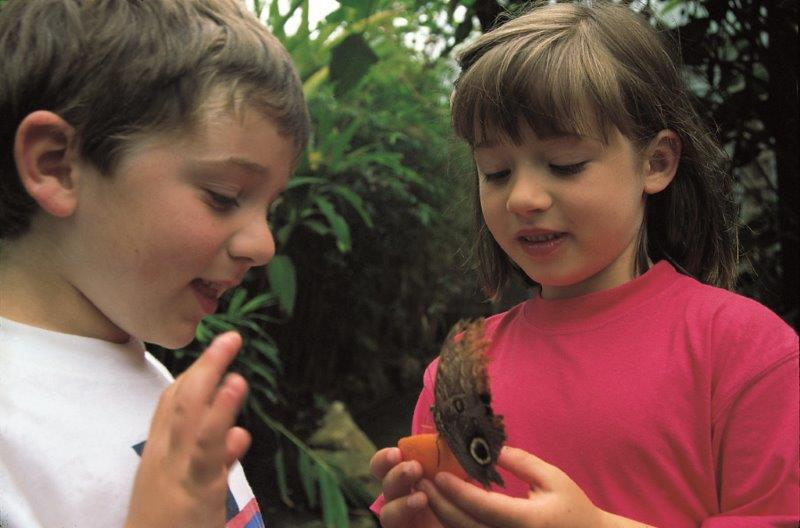 Children at Stratford Butterfly Farm