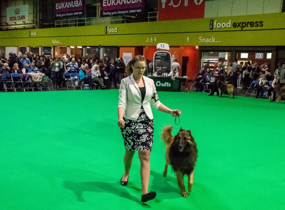 Pic One of the dogs showing at Crufts